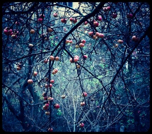 owoce Zimy